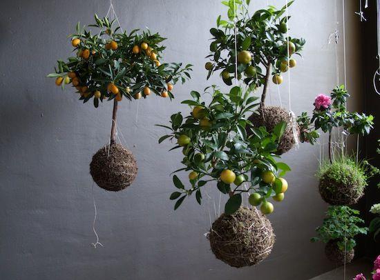 jardines-colgantes-18