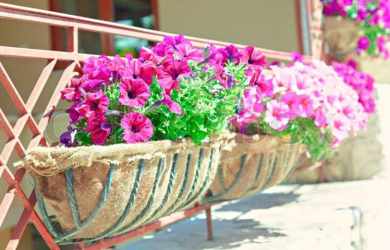 balcon-cajas-flores-6