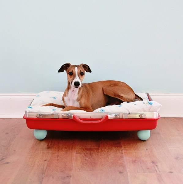 cama-mascotas-20