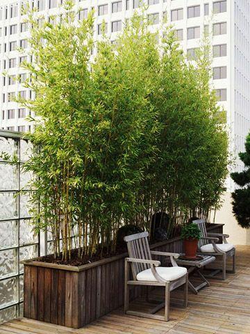 decorar-con-bambu-20