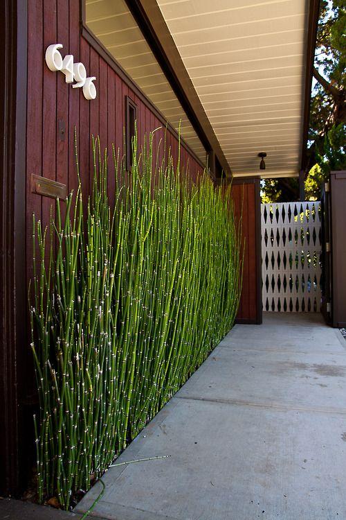 decorar-con-bambu-5