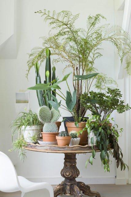 jardines-interiores-1