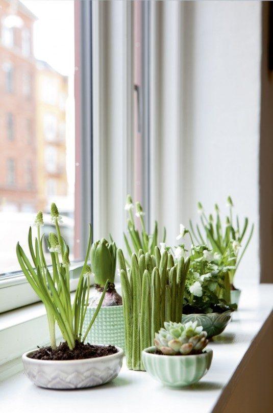jardines-interiores-4