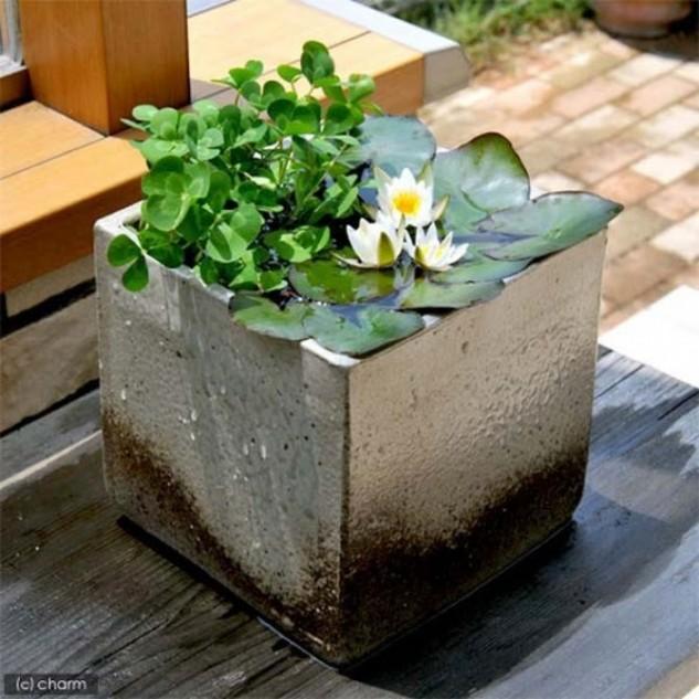 mini-jardines-acuaticos-10