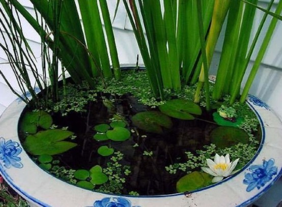 mini-jardines-acuaticos-12