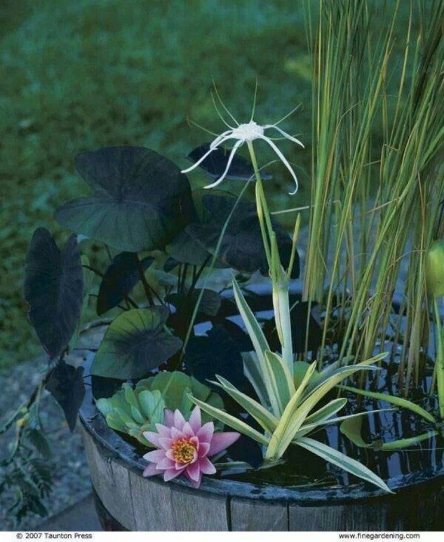 mini-jardines-acuaticos-13