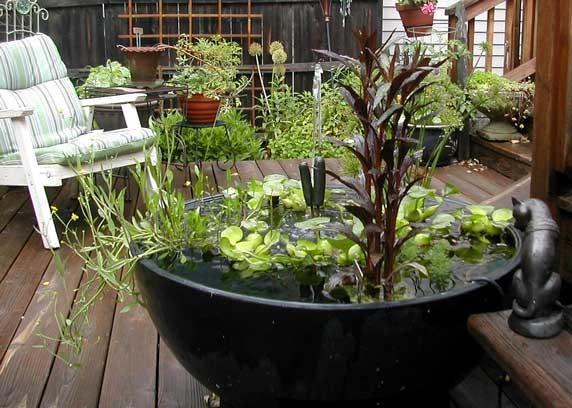mini-jardines-acuaticos-15