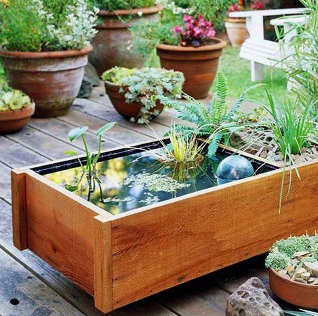 mini-jardines-acuaticos-16