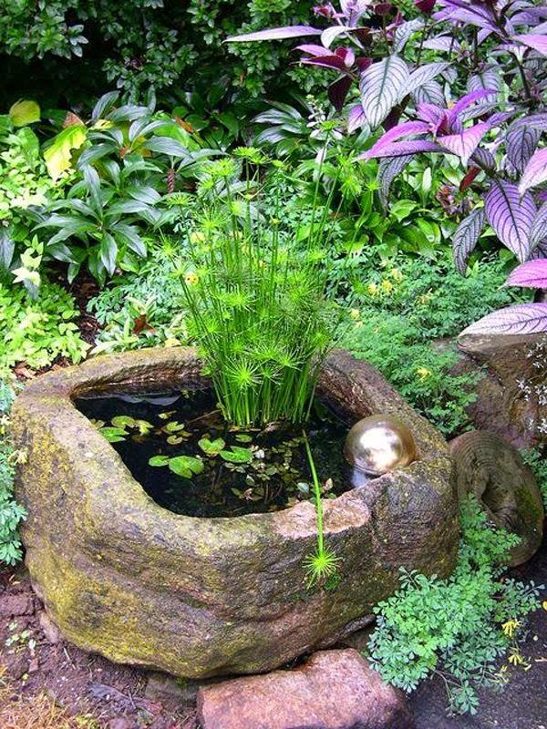 mini-jardines-acuaticos-3