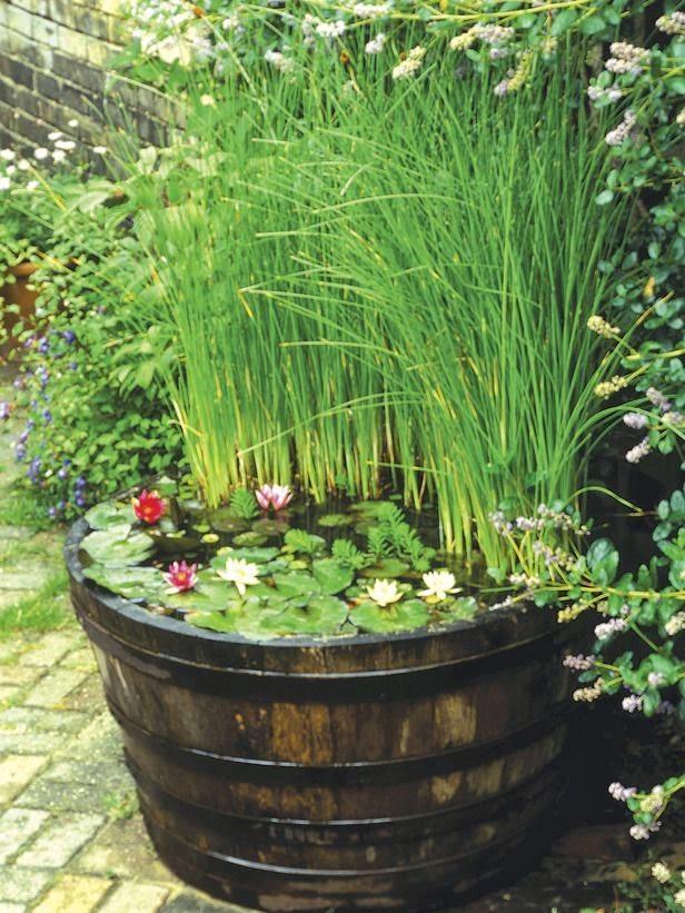 mini-jardines-acuaticos-7