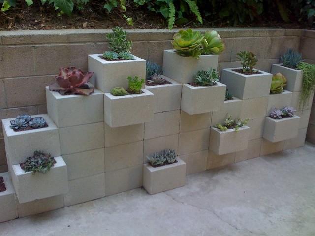 mostrar-sus-plantas-14