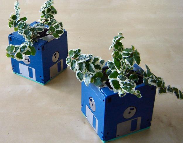 mostrar-sus-plantas-22