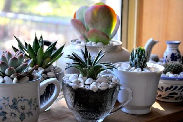 plantas-decorar-hogar-10