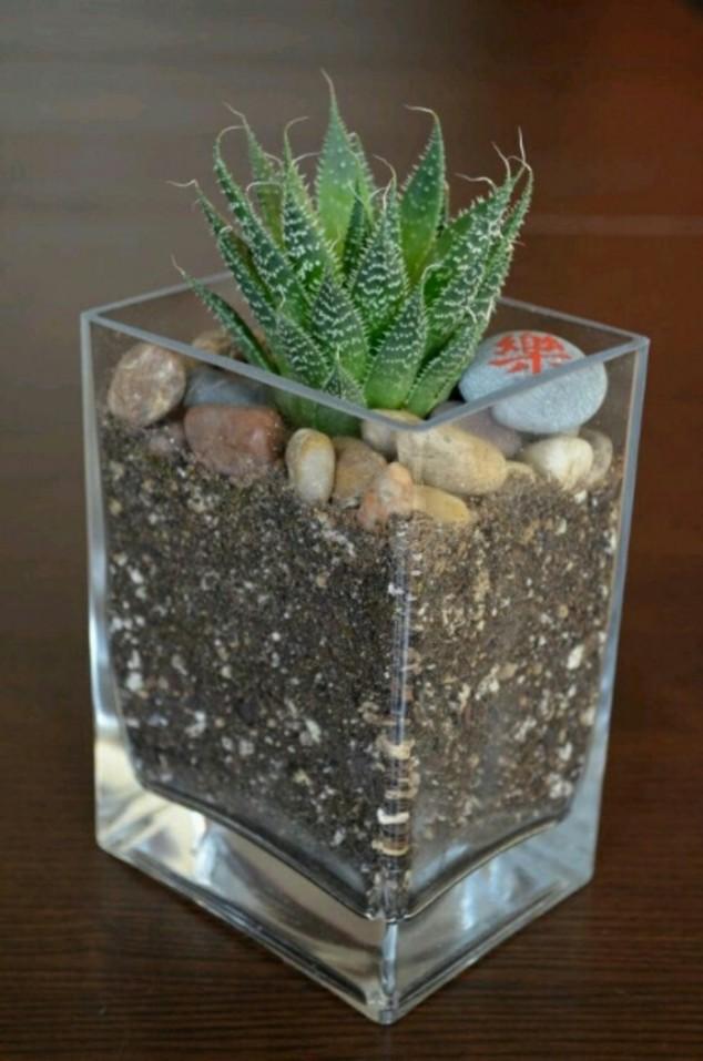 plantas-decorar-hogar-13