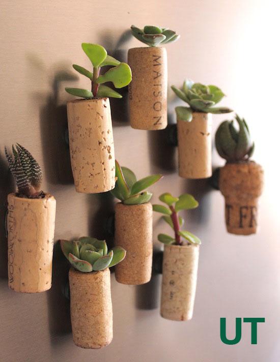plantas-decorar-hogar-15