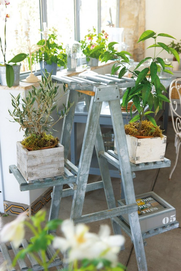 plantas-decorar-hogar-9