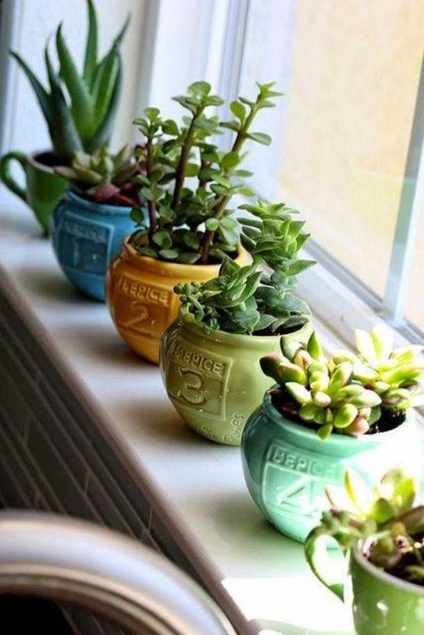 plantas-decorar-hogar